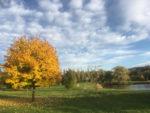 Žlutý strom, mraky na nebi a louka
